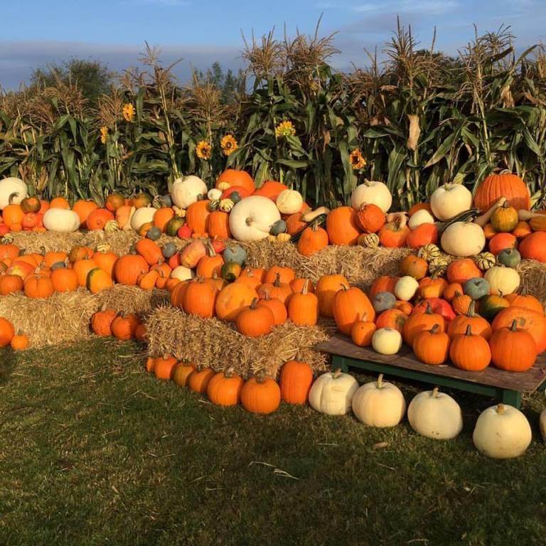 pumpkin-patch-crockford-compressed.jpg