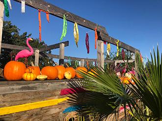 Pumpkin Fest 4 rsz.jpg