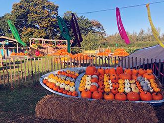 Pumpkin Fest 2 rsz.jpg