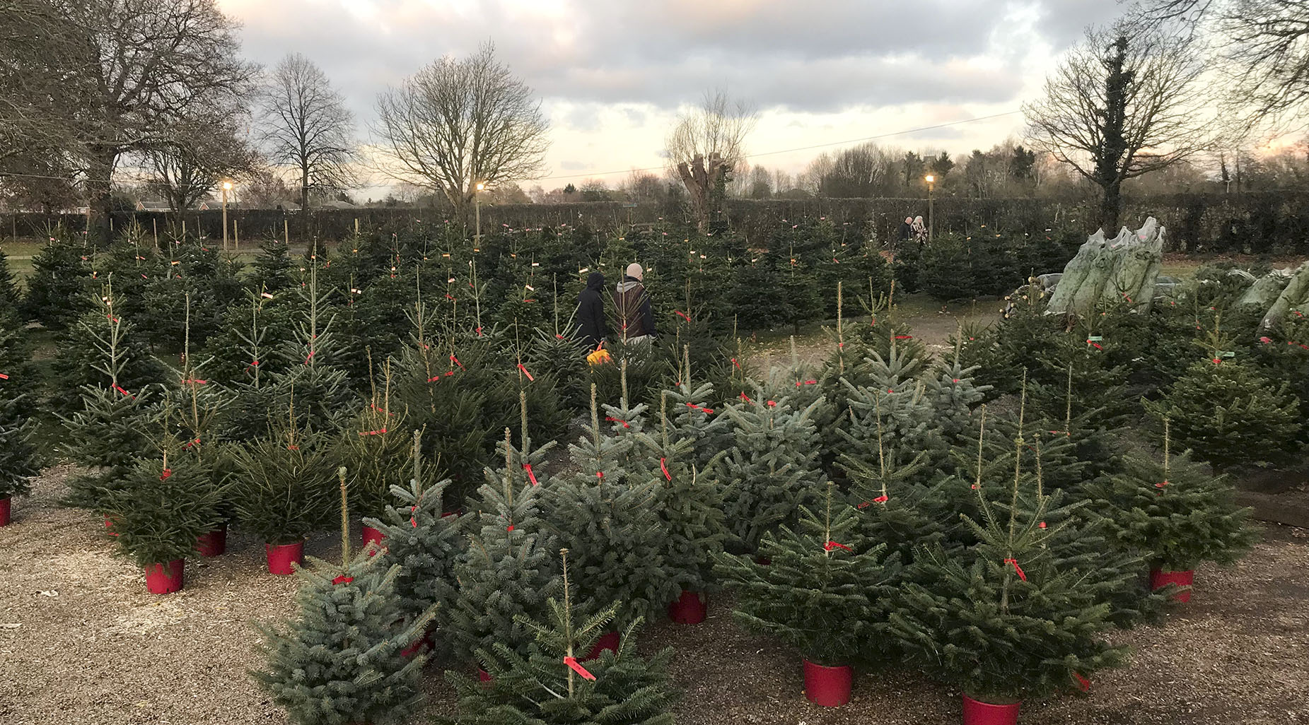 Potted trees on sale crop.jpg