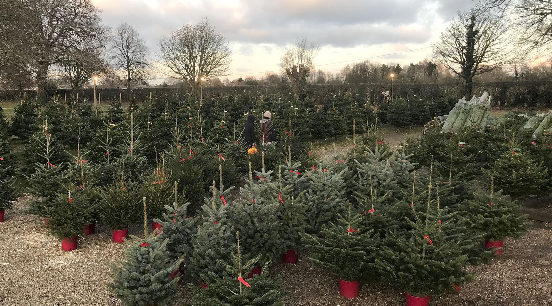 Potted trees on sale crop.jpg
