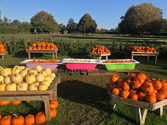 Pumpkin Fest 1 rsz.jpg