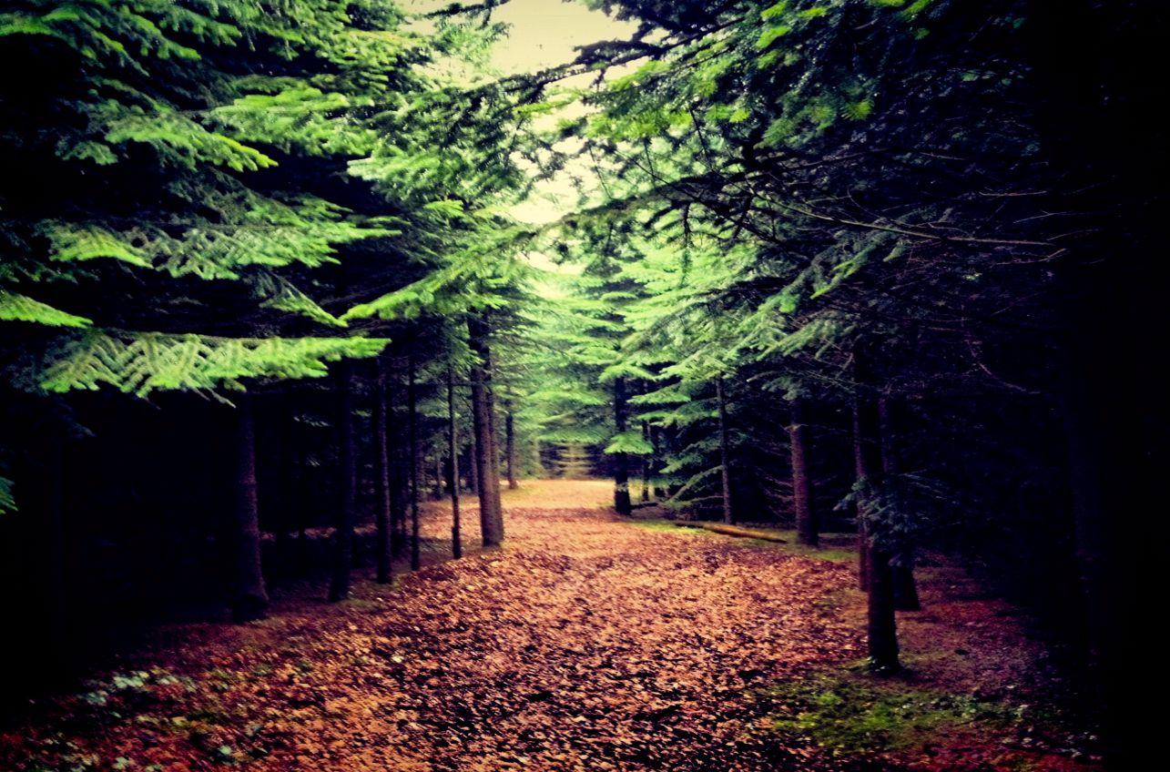 FB Wood trail.jpg